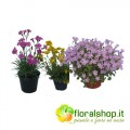 Perennial Plants Collection type 2