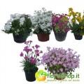 Perennial Plants Collection - vessel diameter 14 (6 plants)