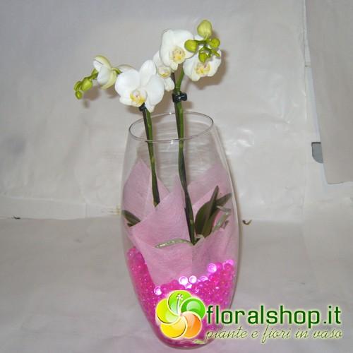 Orchidea bianca 2 rami con deco gel e vaso in vetro for Costo orchidea